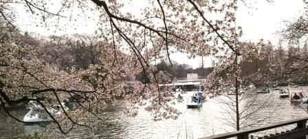 2017井の頭公園 (5)